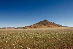Paisagem árida no deserto de pedra Foto de Stock Royalty Free