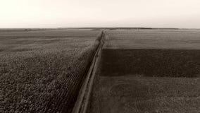 Paisagem aérea bonita, campos de trigo video estoque