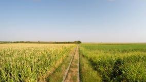 Paisagem aérea das várias colheitas que avançam lentamente acima da estrada secundária, ideia dianteira do campo Gravado em 4k filme