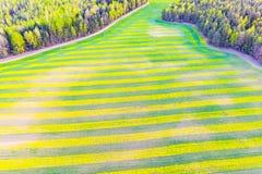 Paisagem aérea modelada Couve-nabiça que cresce na terra perto da floresta fotos de stock