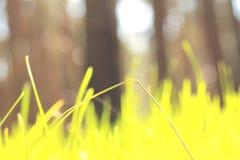 Paisagem abstrata do verão com grama verde em um fundo da floresta/borrão da agudeza Foto de Stock Royalty Free