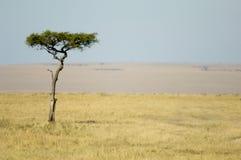Paisagem africana Fotografia de Stock