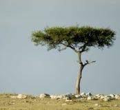 Paisagem africana Foto de Stock