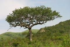Paisagem africana Imagens de Stock Royalty Free
