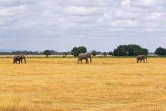 Paisagem africana com elefantes Imagens de Stock Royalty Free
