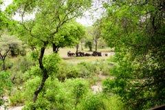 Paisagem africana com elefantes Fotografia de Stock