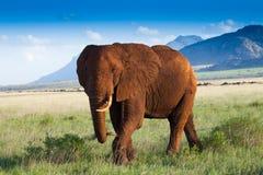 Paisagem africana com elefantes vermelhos Fotografia de Stock Royalty Free