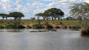 Paisagem africana com hipopótamo fotografia de stock