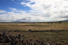 Paisagem africana com wildebeest da migração imagem de stock