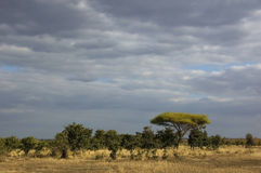 Paisagem africana do savanna Imagens de Stock Royalty Free