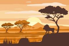 Paisagem africana, leão, savana, por do sol, vetor, ilustração, estilo dos desenhos animados, isolado Imagens de Stock Royalty Free