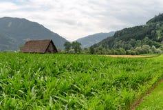 Paisagem agrícola, Áustria Imagem de Stock