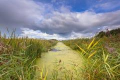 Paisagem agrícola com o canal com a lentilha-d'água em Friesland, Ne Foto de Stock Royalty Free