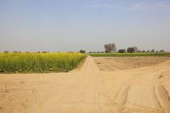 Paisagem agrícola de rajasthan foto de stock