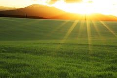 Paisagem agrícola do verão Foto de Stock Royalty Free