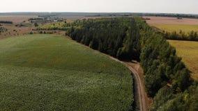 Paisagem agr?cola bonita de fileiras verdes no milho de campo aberto filme