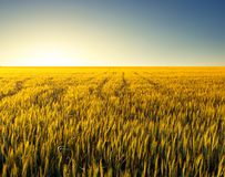Paisagem agricultural Fotos de Stock