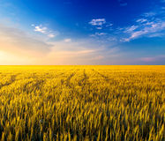 Paisagem agricultural Imagem de Stock Royalty Free