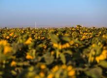 Paisagem agricultural Foto de Stock