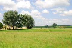 Paisagem agricultural Imagens de Stock Royalty Free