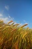 Paisagem agricultural Fotografia de Stock