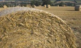 Paisagem agricultural do campo de milho de Haybales Fotos de Stock Royalty Free