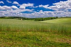 Paisagem agricultural do verão Um campo de cereal montanhoso sob um céu nebuloso azul com as hastes no primeiro plano fotografia de stock royalty free