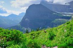 Paisagem alpina alta na fuga da geleira de Grinnell no parque nacional de geleira, montana imagem de stock royalty free