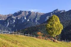 Paisagem alpina do outono colorido impressionante com campos e as montanhas altas verdes, farelo, a Transilvânia, Romênia Foto de Stock
