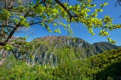 Paisagem alpina do verão imagem de stock royalty free