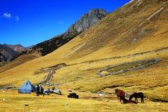 Paisagem alpina em Cordiliera Huayhuash fotos de stock royalty free