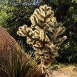 Paisagem alta do deserto e cacto retroiluminado Fotos de Stock