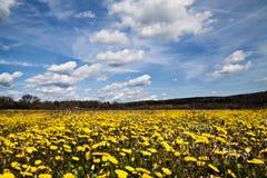 Paisagem amarela das flores imagem de stock royalty free