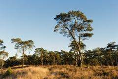 A paisagem amarra Foto de Stock Royalty Free