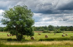 Paisagem, ambiente, verão, nublado, pacotes da palha no campo colhido fotografia de stock royalty free