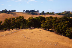 Campo de Austrália foto de stock royalty free