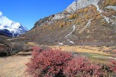paisagem bonita Foto de Stock Royalty Free