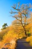 Paisagem bonita. Autumn Pathway Co. Cortiça, Irlanda. fotografia de stock