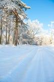 Paisagem bonita com árvores cobertos de neve - dia do inverno de inverno ensolarado Foto de Stock