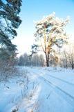 Paisagem bonita com árvores cobertos de neve - dia do inverno de inverno ensolarado Imagens de Stock Royalty Free