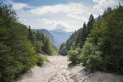 A paisagem bonita com evegreen a floresta imagem de stock royalty free