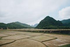 a paisagem bonita com montanhas verdes e os campos de almofada em Phong Nha KE golpeiam o nacional imagem de stock