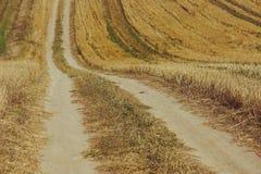 Paisagem bonita com o céu e o campo de trigo verde Fotografia de Stock