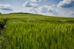 Paisagem bonita com o céu e o campo de trigo verde Fotografia de Stock Royalty Free