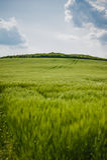 Paisagem bonita com o céu e o campo de trigo verde Fotos de Stock Royalty Free
