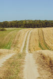 Paisagem bonita com o céu e o campo de trigo verde Imagens de Stock