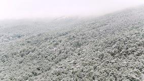 Paisagem bonita com pinheiros nevados em uma inclinação de montanha íngreme, Utá, EUA tiro Montes nevoentos cobertos com o nevado video estoque