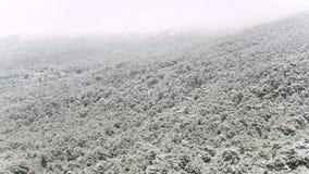 Paisagem bonita com pinheiros nevados em uma inclinação de montanha íngreme, Utá, EUA tiro Montes nevoentos cobertos com o nevado filme