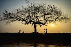 Paisagem bonita com a silhueta das árvores no por do sol com a mulher vietnamiana que veste o vestido tradicional Ao Dai que está Foto de Stock Royalty Free