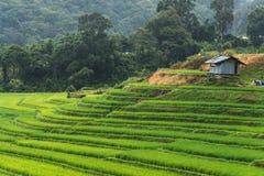 Paisagem bonita com terraço verde imagens de stock